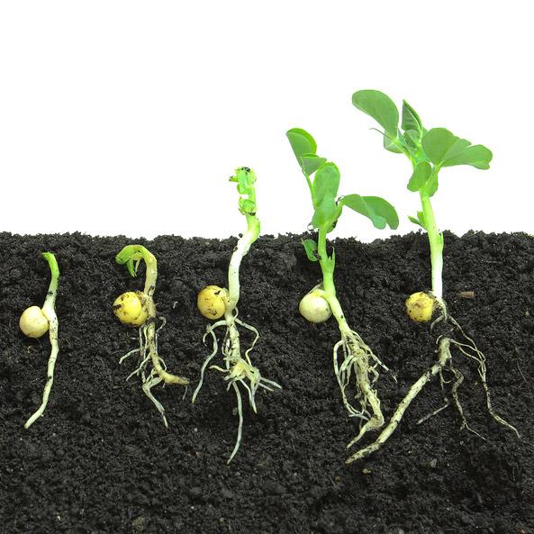 Plants and soil soil measurements for Soil for plants