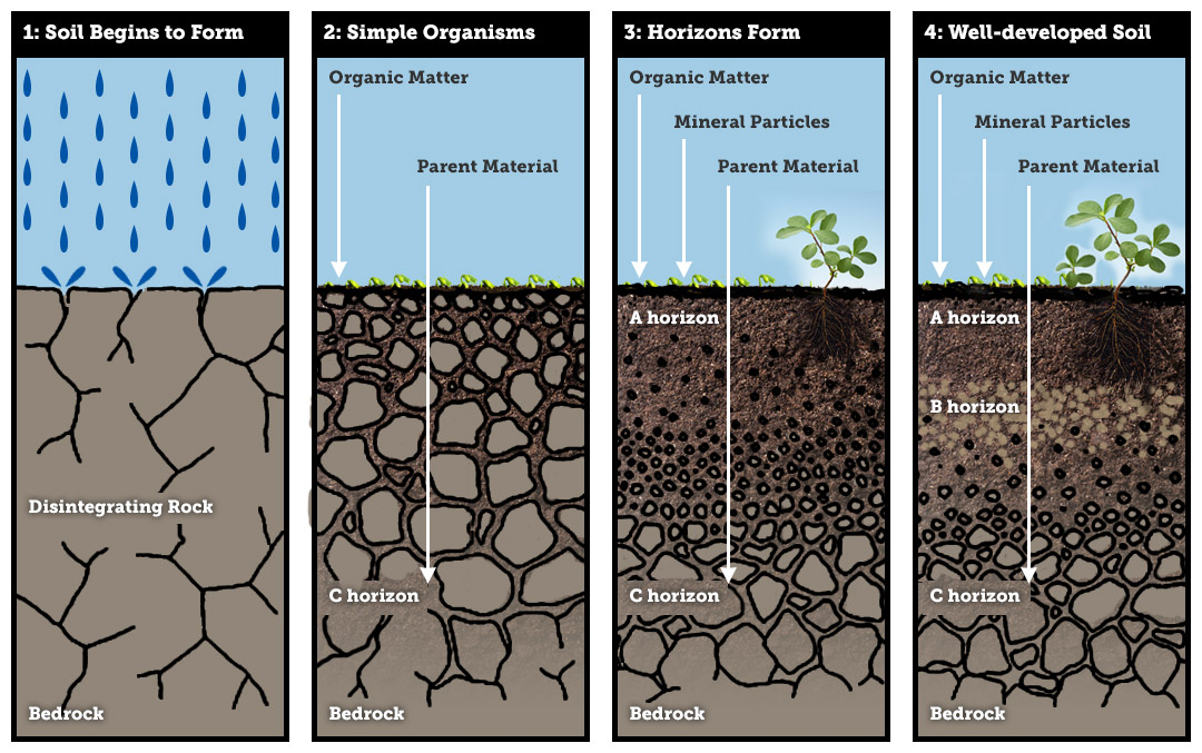 Weathering the Parent Material | Climate and Soil Composition