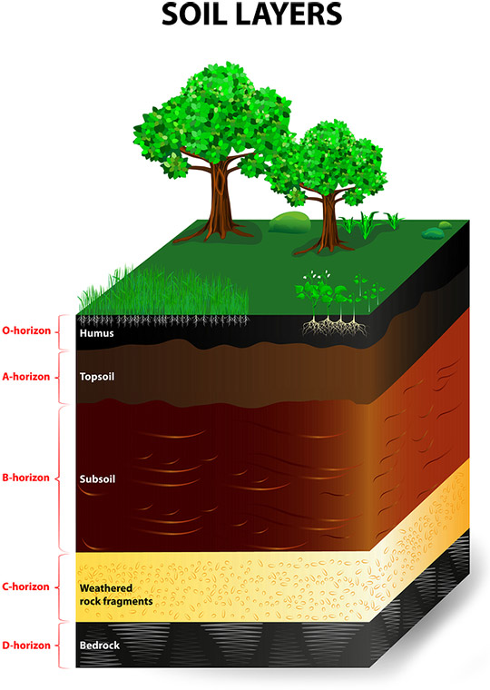 Soil horizons climate and soil composition for Soil in sentence